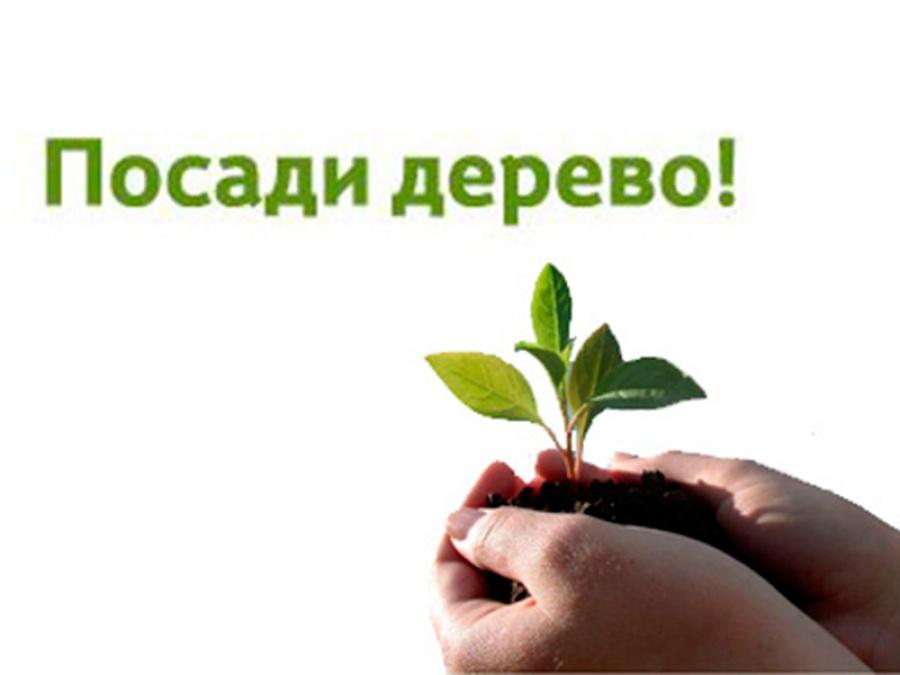 Картинка акции посади дерево